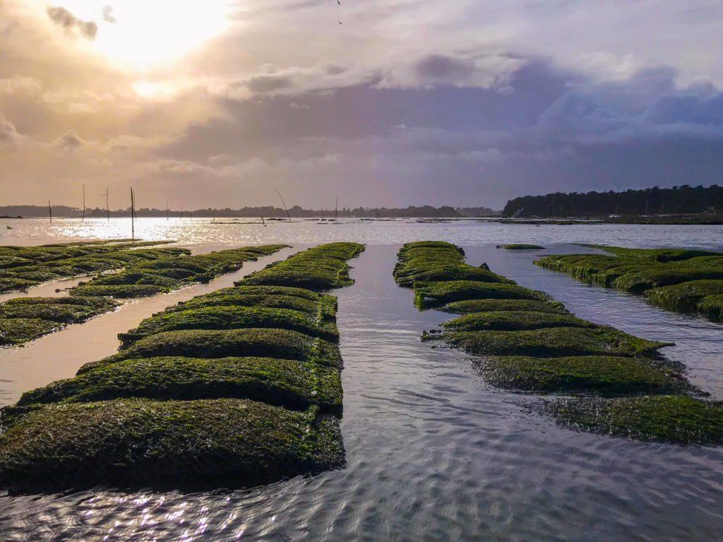 Au Rythme des Marées - Découverte des parcs ostréicoles